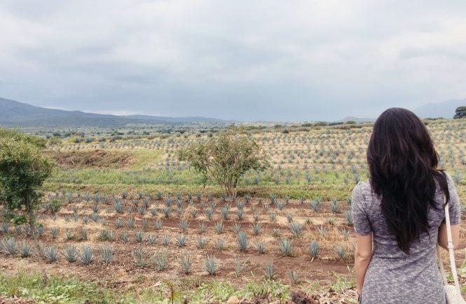 tequila-mariachis-in-guadalajara16